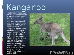 Kangaroo The kangaroo has a bag for cubs, it opens forward to a head, like an ap