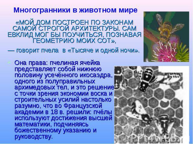 Многогранники в животном мире «МОЙ ДОМ ПОСТРОЕН ПО ЗАКОНАМ САМОЙ СТРОГОЙ АРХИТЕКТУРЫ. САМ ЕВКЛИД МОГ БЫ ПОУЧИТЬСЯ, ПОЗНАВАЯ ГЕОМЕТРИЮ МОИХ СОТ», — говорит пчела в «Тысяче и одной ночи». Она права: пчелиная ячейка представляет собой нижнюю половину у…