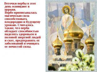 Веточки вербы в этот день освящают в церкви.Вербе приписывалась магическая сила