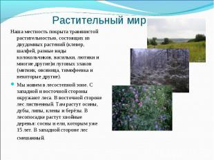 Растительный мир Наша местность покрыта травянистой растительностью, состоящих и