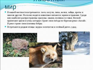 Животный мир В нашей местности встречаются: лоси, косули, лисы, волки, зайцы, кр