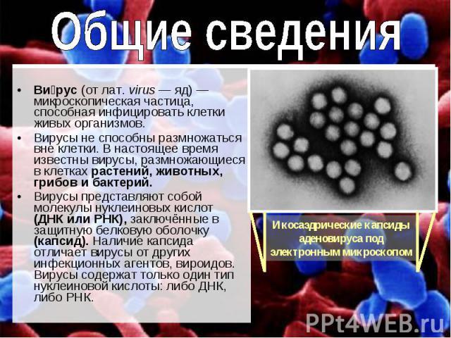 Вирус (от лат. virus — яд) — микроскопическая частица, способная инфицировать клетки живых организмов. Вирусы не способны размножаться вне клетки. В настоящее время известны вирусы, размножающиеся в клетках растений, животных, грибов и бактерий.Виру…