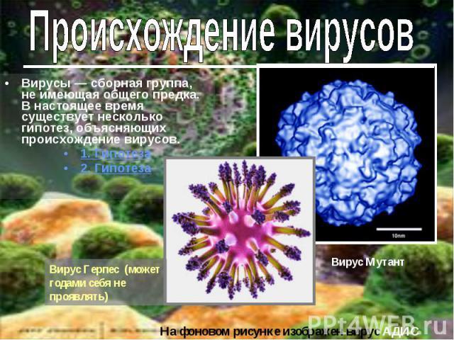 Вирусы — сборная группа, не имеющая общего предка. В настоящее время существует несколько гипотез, объясняющих происхождение вирусов.1. Гипотеза2. ГипотезаВирус Герпес (может годами себя не проявлять)
