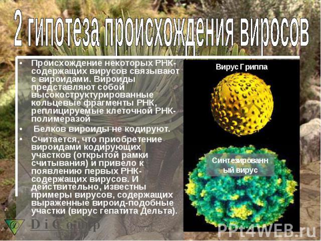 Происхождение некоторых РНК-содержащих вирусов связывают с вироидами. Вироиды представляют собой высокоструктурированные кольцевые фрагменты РНК, реплицируемые клеточной РНК-полимеразой Белков вироиды не кодируют. Считается, что приобретение вироида…