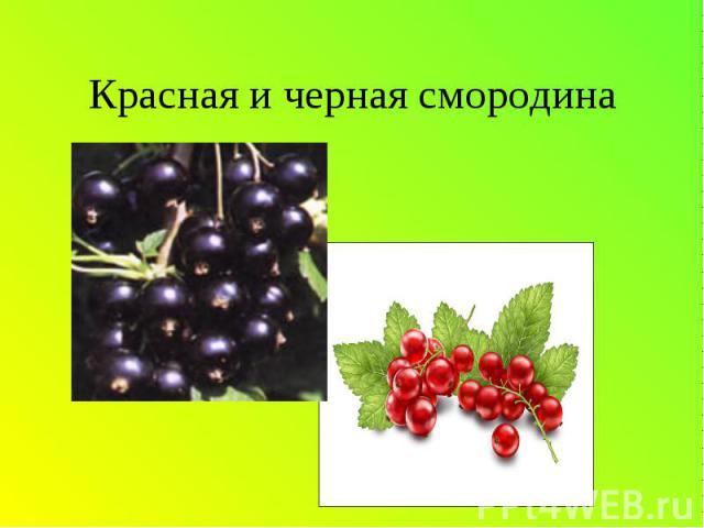 Красная и черная смородина