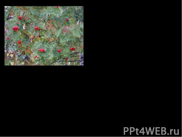 Я как будто родился заново,Легче дышится, не солгу, - Ни себя, ни других обманыватьНикогда уже не смогу…А.Яшин Сборники стихов: «Босиком по земле» (1965),«День творенья» (1968).Прозаический дебют автора происходит во II половине 1950-х годов (расска…