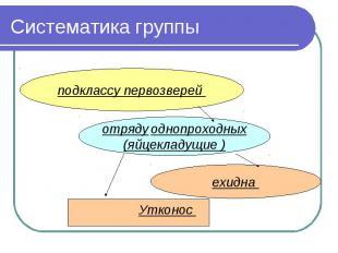 Систематика группы подклассу первозверей отряду однопроходных(яйцекладущие )ехид