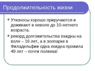 Продолжительность жизни Утконосы хорошо приручаются и доживают в неволе до 10-ле