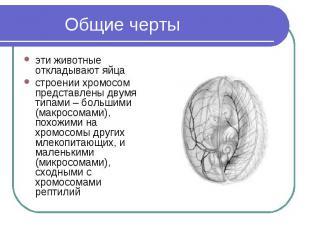 Общие черты эти животные откладывают яйца строении хромосом представлены двумя т