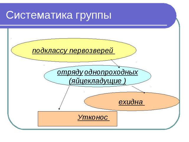 Систематика группы подклассу первозверей отряду однопроходных(яйцекладущие )ехидна Утконос