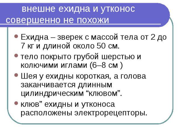 """внешне ехидна и утконос совершенно не похожи Ехидна – зверек с массой тела от 2 до 7 кг и длиной около 50 см. тело покрыто грубой шерстью и колючими иглами (6–8 см )Шея у ехидны короткая, а голова заканчивается длинным цилиндрическим """"клювом"""". клюв""""…"""