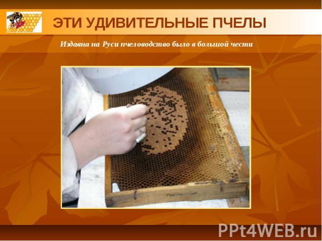 ЭТИ УДИВИТЕЛЬНЫЕ ПЧЕЛЫИздавна на Руси пчеловодство было в большой чести