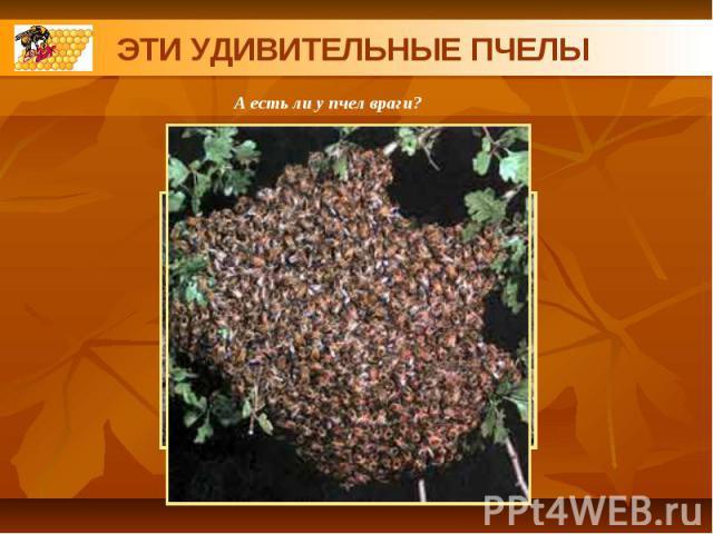 ЭТИ УДИВИТЕЛЬНЫЕ ПЧЕЛЫА есть ли у пчел враги?