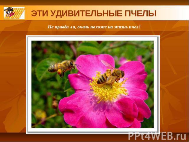 ЭТИ УДИВИТЕЛЬНЫЕ ПЧЕЛЫНе правда ли, очень похоже на жизнь пчел!
