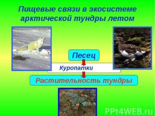 Пищевые связи в экосистеме арктической тундры летом