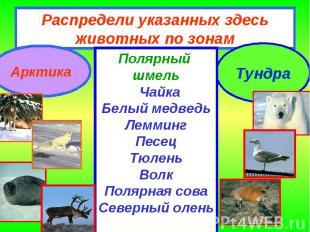 Распредели указанных здесь животных по зонам Полярный шмель ЧайкаБелый медведьЛе