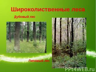Широколиственные леса Дубовый лесЛиповый лес