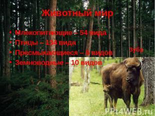 Животный мир Млекопитающие – 54 видаПтицы – 134 видаПресмыкающиеся – 5 видовЗемн