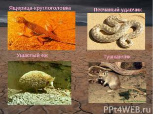 Ящерица-круглоголовкаПесчаный удавчикУшастый ежТушканчик