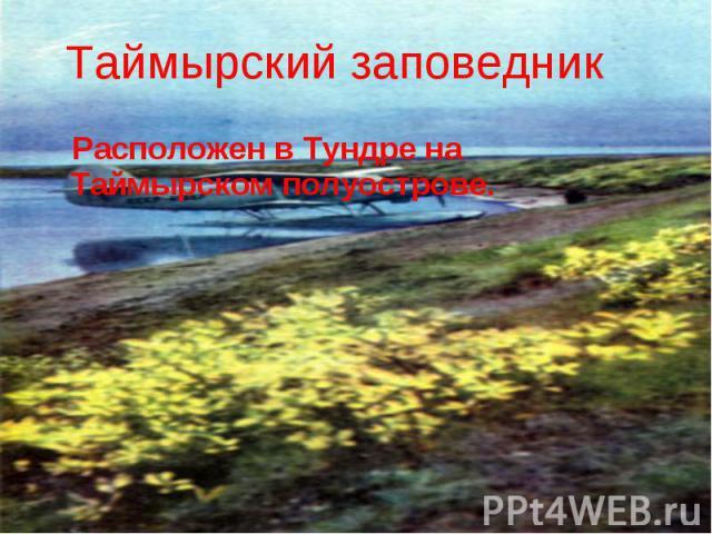 Таймырский заповедник Расположен в Тундре на Таймырском полуострове.