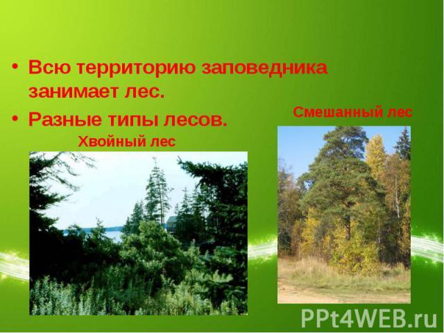 Всю территорию заповедника занимает лес.Разные типы лесов. Хвойный лесСмешанный лес