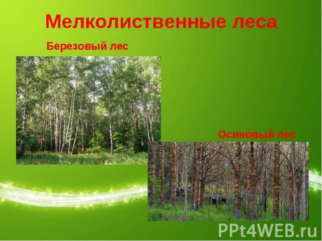 Мелколиственные леса Березовый лесОсиновый лес