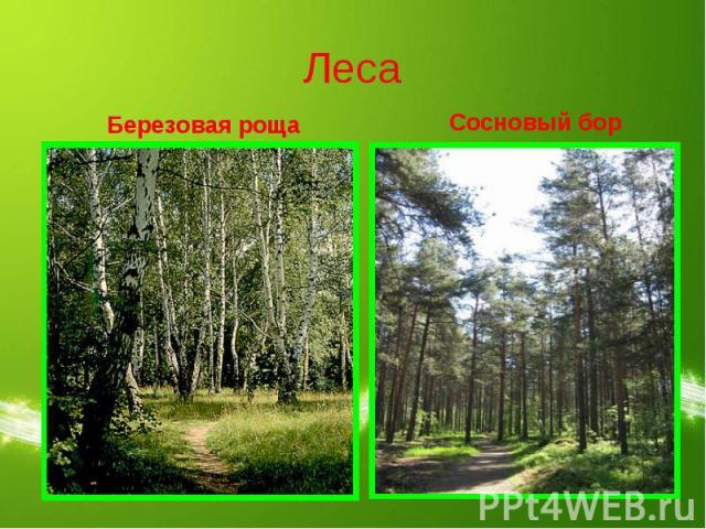 Леса Березовая рощаСосновый бор