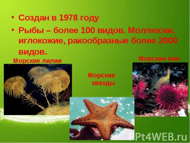Создан в 1978 годуРыбы – более 100 видов. Моллюски, иглокожие, ракообразные более 2000 видов. Морские лилииМорские звездыМорские ежи