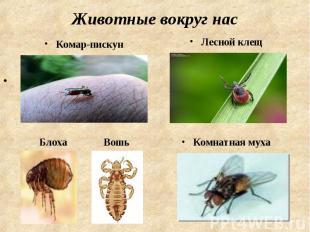 Животные вокруг нас Комар-пискунЛесной клещ