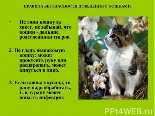 ПРАВИЛА БЕЗОПАСНОСТИ ПОВЕДЕНИЯ С КОШКАМИ Не тяни кошку за хвост, не забывай, что