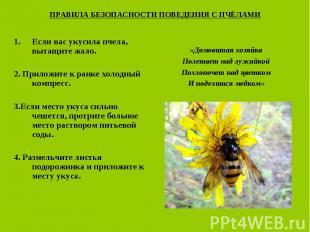 ПРАВИЛА БЕЗОПАСНОСТИ ПОВЕДЕНИЯ С ПЧЁЛАМИ Если вас укусила пчела, вытащите жало.2