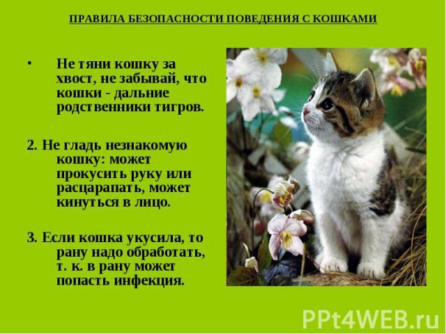 ПРАВИЛА БЕЗОПАСНОСТИ ПОВЕДЕНИЯ С КОШКАМИ Не тяни кошку за хвост, не забывай, что кошки - дальние родственники тигров.2. Не гладь незнакомую кошку: может прокусить руку или расцарапать, может кинуться в лицо.3. Если кошка укусила, то рану надо обрабо…