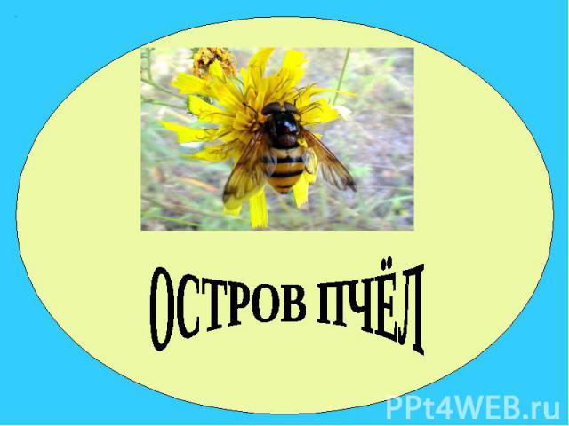 ОСТРОВ ПЧЁЛ