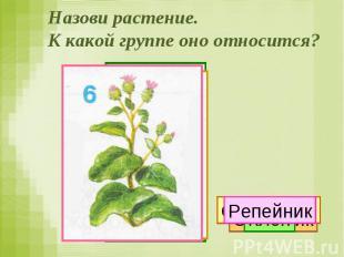 Назови растение. К какой группе оно относится?
