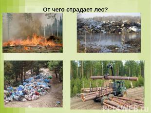 От чего страдает лес?