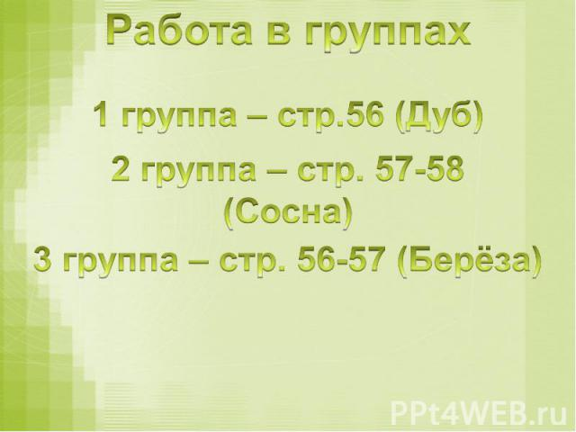 Работа в группах 1 группа – стр.56 (Дуб)2 группа – стр. 57-58 (Сосна)3 группа – стр. 56-57 (Берёза)