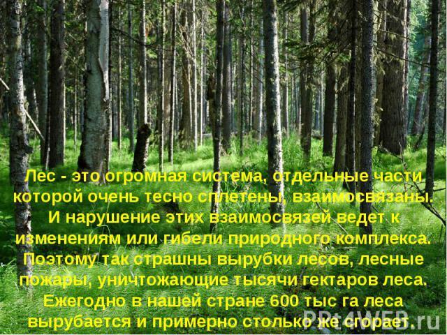Лес - это огромная система, отдельные части которой очень тесно сплетены, взаимосвязаны. И нарушение этих взаимосвязей ведет к изменениям или гибели природного комплекса. Поэтому так страшны вырубки лесов, лесные пожары, уничтожающие тысячи гектаров…