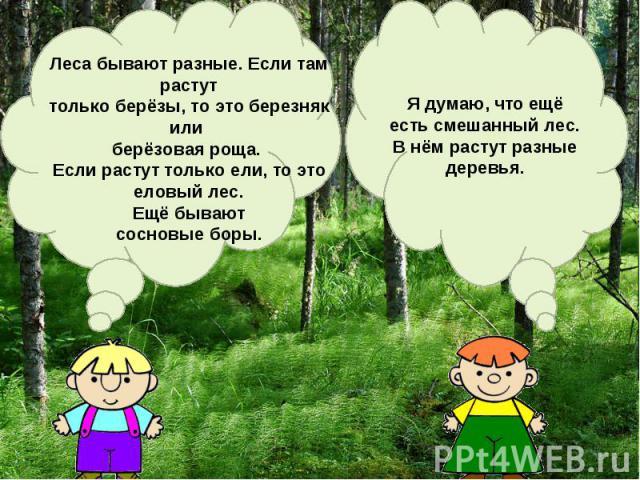 Леса бывают разные. Если там растуттолько берёзы, то это березняк или берёзовая роща. Если растут только ели, то это еловый лес. Ещё бывают сосновые боры.Я думаю, что ещёесть смешанный лес.В нём растут разныедеревья.