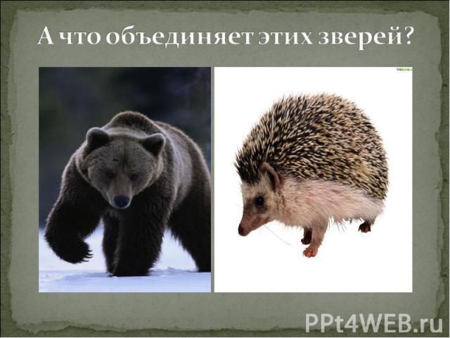 А что объединяет этих зверей?
