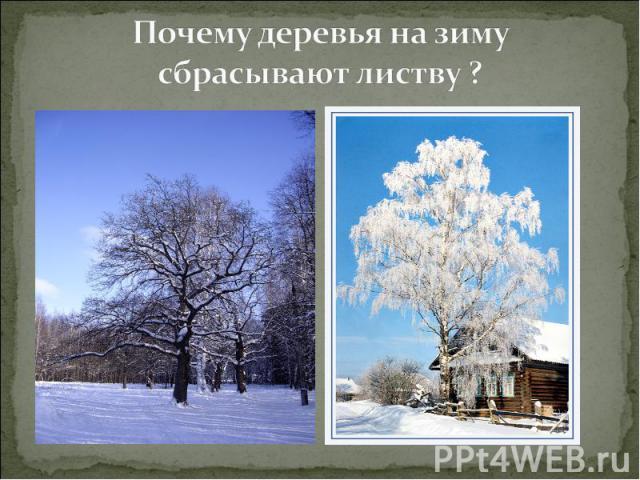 Почему деревья на зиму сбрасывают листву ?