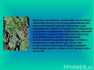 Виноград, как правило, размножают вегетативно: черенками (используются для размн