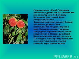 Родина персика – Китай. Там цветок персикового дерева считается символом вечной