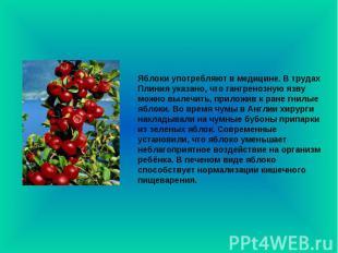 Яблоки употребляют в медицине. В трудах Плиния указано, что гангренозную язву мо