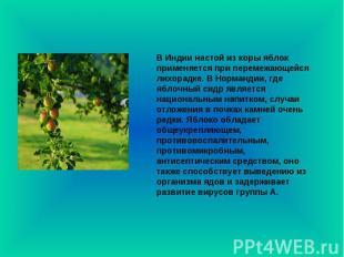 В Индии настой из коры яблок применяется при перемежающейся лихорадке. В Норманд