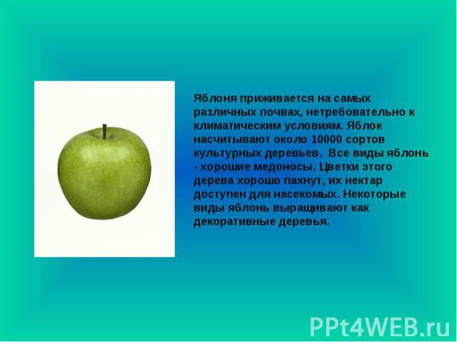 Яблоня приживается на самых различных почвах, нетребовательно к климатическим условиям. Яблок насчитывают около 10000 сортов культурных деревьев. Все виды яблонь - хорошие медоносы. Цветки этого дерева хорошо пахнут, их нектар доступен для насекомы…