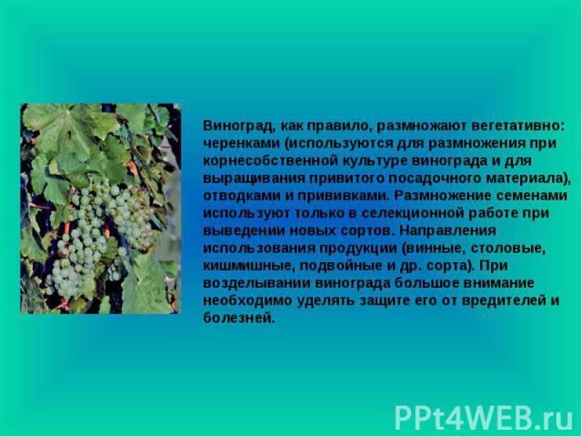 Виноград, как правило, размножают вегетативно: черенками (используются для размножения при корнесобственной культуре винограда и для выращивания привитого посадочного материала), отводками и прививками. Размножение семенами используют только в селек…