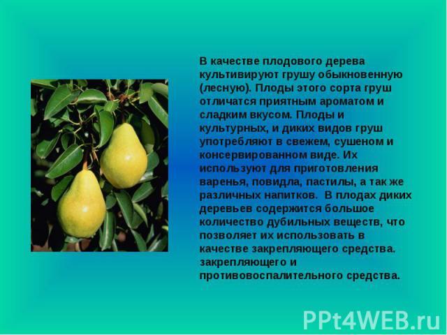 В качестве плодового дерева культивируют грушу обыкновенную (лесную). Плоды этого сорта груш отличатся приятным ароматом и сладким вкусом. Плоды и культурных, и диких видов груш употребляют в свежем, сушеном и консервированном виде. Их используют дл…