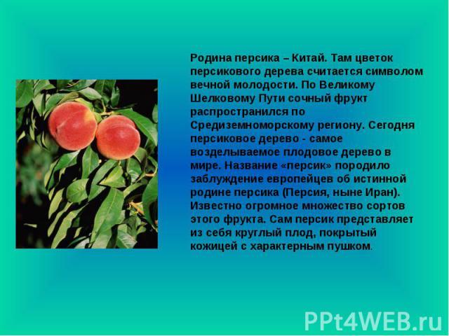 Родина персика – Китай. Там цветок персикового дерева считается символом вечной молодости. По Великому Шелковому Пути сочный фрукт распространился по Средиземноморскому региону. Сегодня персиковое дерево - самое возделываемое плодовое дерево в мире.…