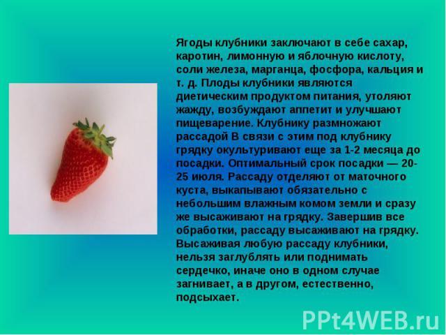 Ягоды клубники заключают в себе сахар, каротин, лимонную и яблочную кислоту, соли железа, марганца, фосфора, кальция и т. д. Плоды клубники являются диетическим продуктом питания, утоляют жажду, возбуждают аппетит и улучшают пищеварение. Клубнику ра…