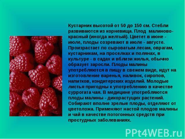 Кустарник высотой от 50 до 150 см. Стебли развиваются из корневища. Плод малиново-красный (иногда желтый). Цветет в июне - июле, плоды созревают в июле - августе. Произрастает по сыроватым лесам, оврагам, кустарникам, на проселках и полянах, в культ…